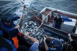 Resultado de imagen para http://ciperchile.cl/2016/08/25/las-evidencias-de-los-pagos-politicos-de-las-pesqueras-del-sur/