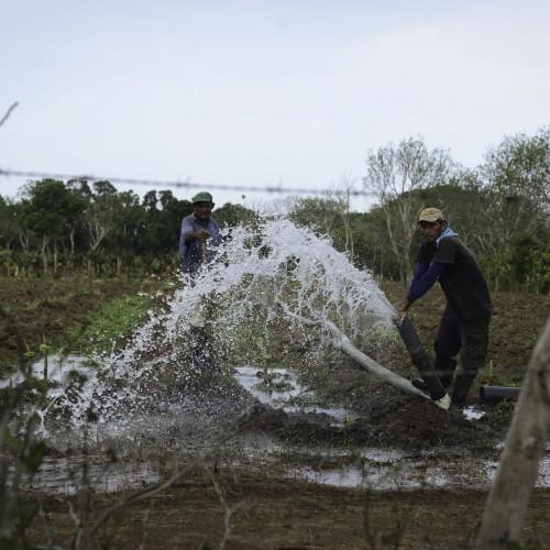 Agricultores de plátanos usan el agua del Gran Lago para regar los sembradíos en El Cangrejal, San Jorge, Rivas. Carlos Herrera/Confidencial.