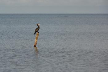 Un ave sobre el Lago Cocibolca. Carlos Herrera/Confidencial.