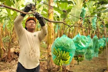 Las tierras robadas por los bananeros en Colombia