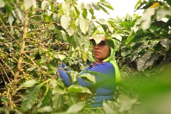 Foto: Iván M. García