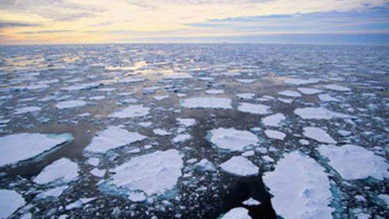 El mundo no tan verde de las multinacionales del medioambiente