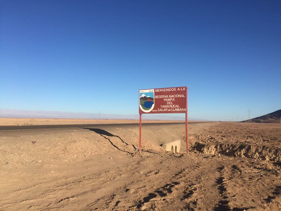 Pampa del Tamarugal