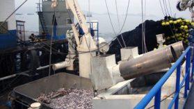 Perú: El pescado que desaparece